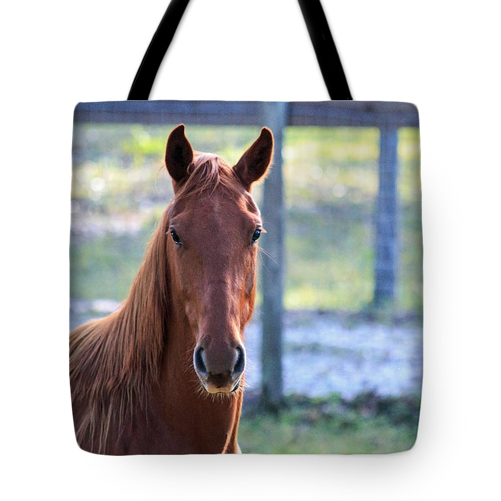 Florida Tote Bag featuring the photograph Babcock Wilderness Ranch - Red Horse Portait by Ronald Reid