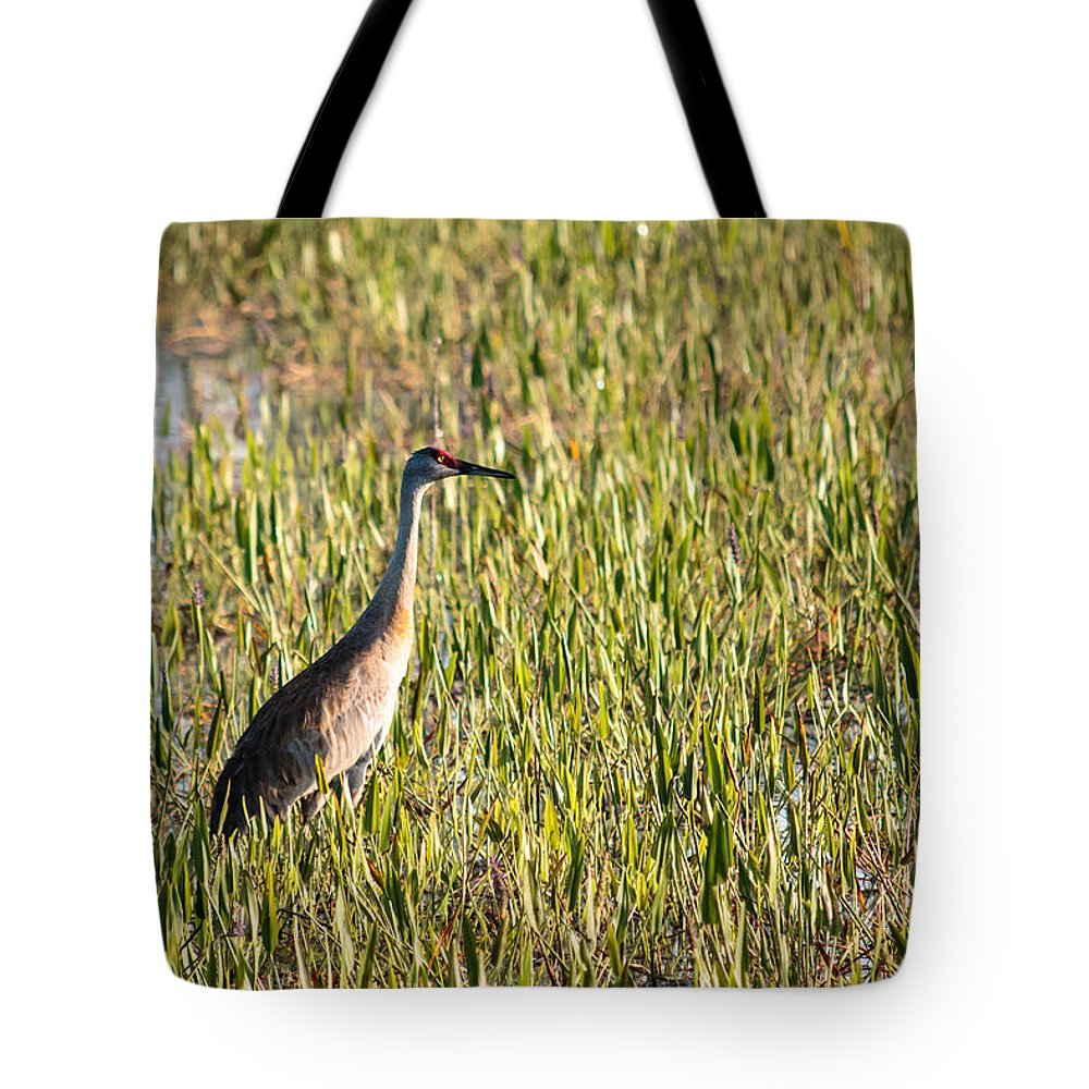 Florida Tote Bag featuring the photograph Babcock Wilderness Ranch - Sandhill Crane by Ronald Reid