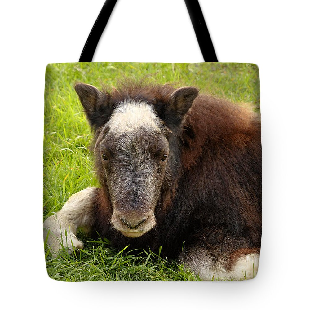 Baby Musk Ox Tote Bag featuring the photograph Baby Alaskan Musk Ox by Teresa A and Preston S Cole Photography