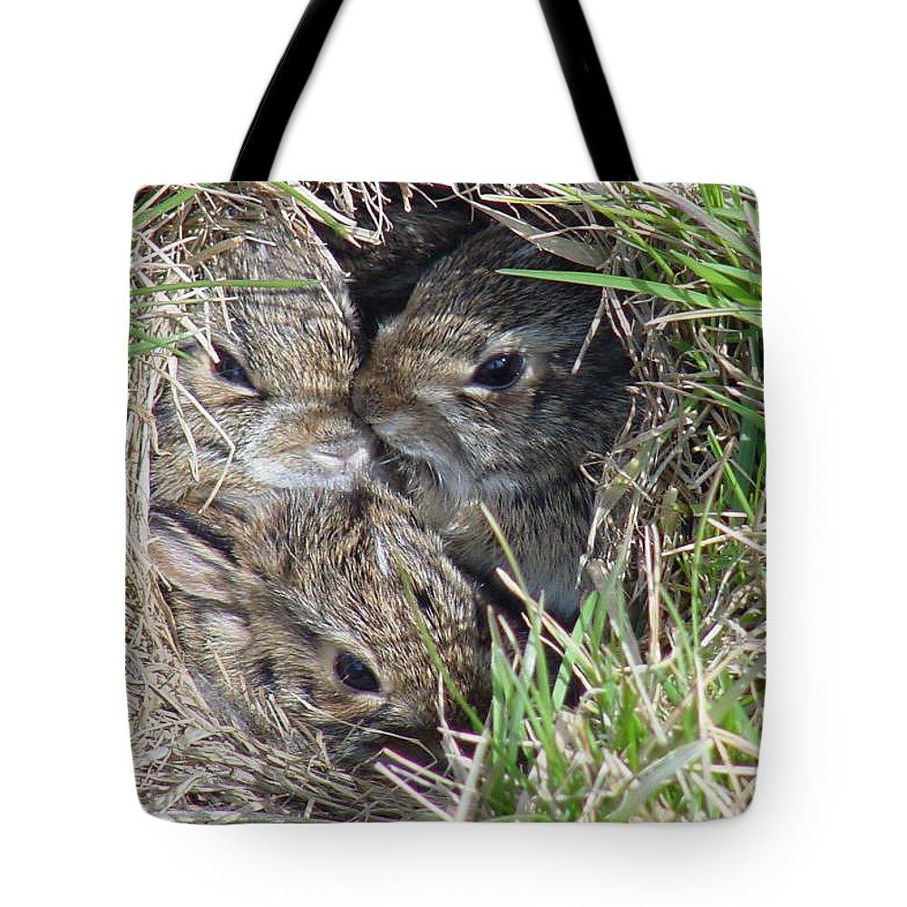 Bunnies Tote Bag featuring the photograph Baby Bunnies by Marsha Elliott