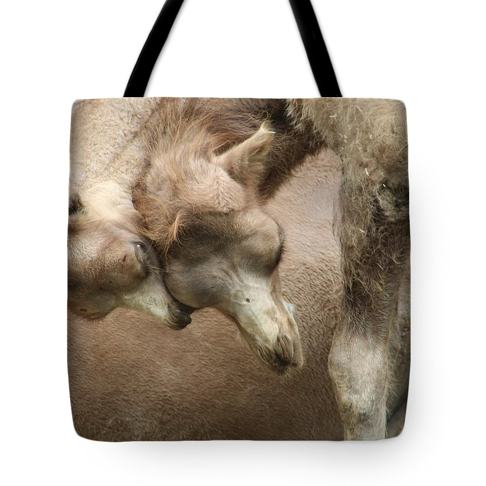 Zoo Tote Bag featuring the photograph Baby Camels by Jean Wolfrum