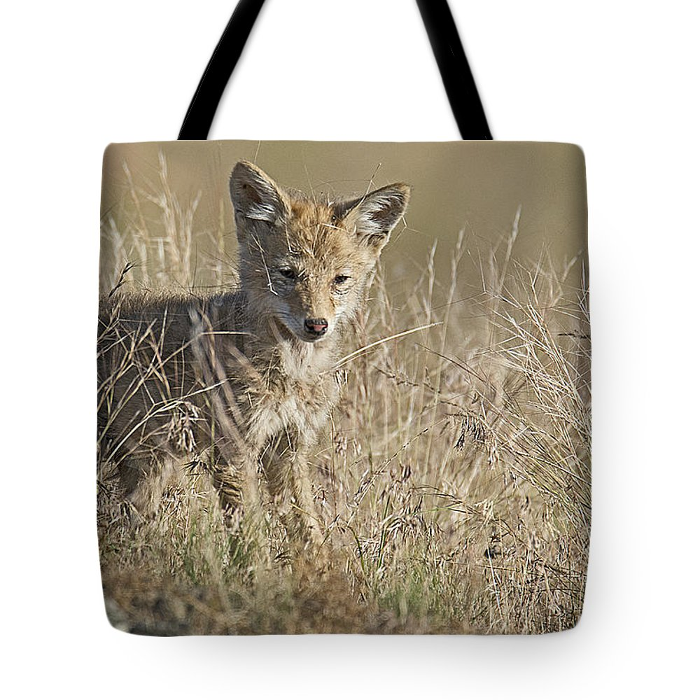 Coyotes Tote Bag featuring the photograph Baby Cutie by Eric Nelson