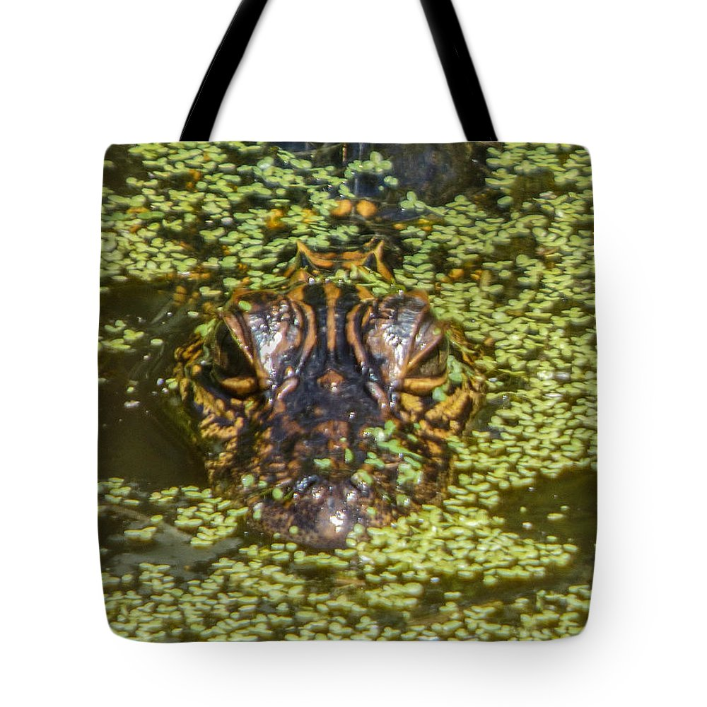 Orcinusfotograffy Tote Bag featuring the photograph Baby Gator by Kimo Fernandez