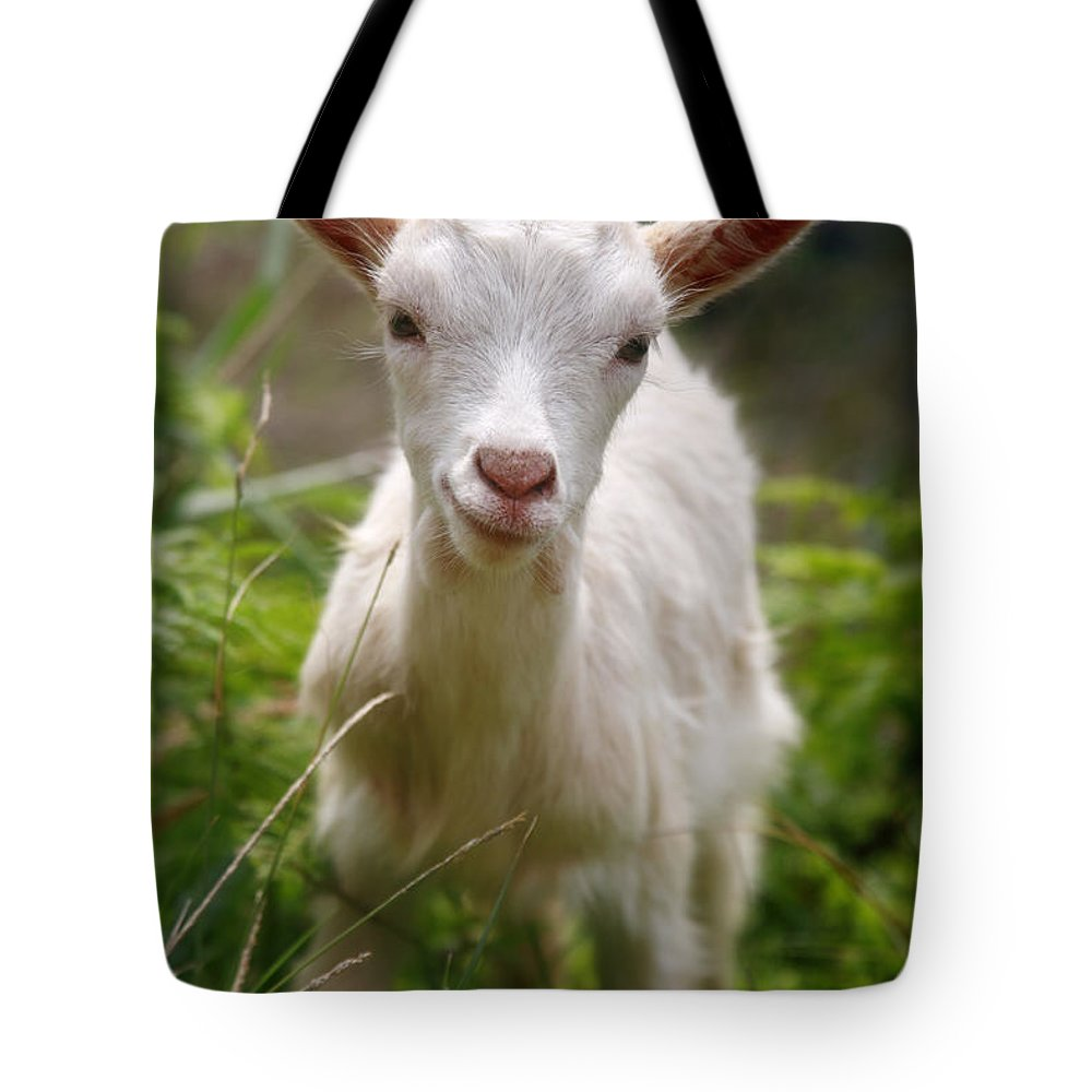Animals Tote Bag featuring the photograph Baby Goat by Gaspar Avila