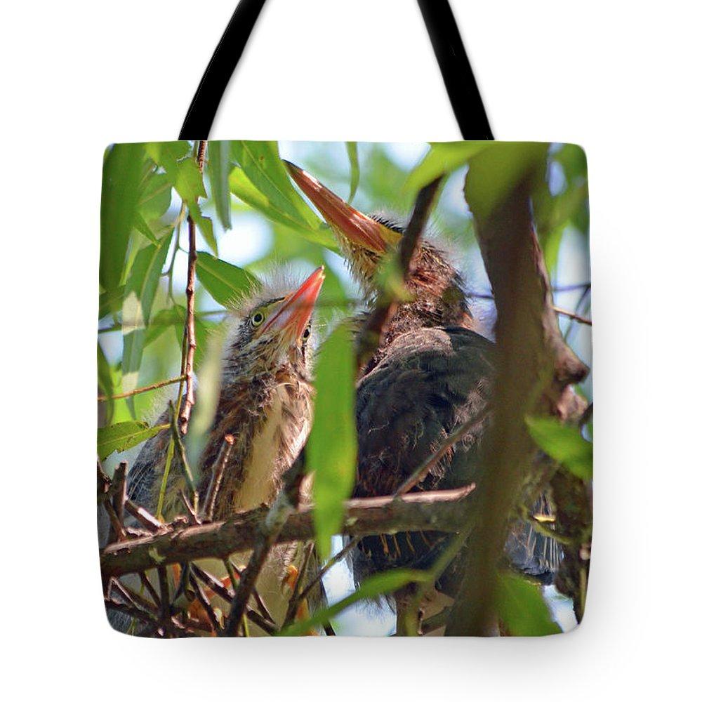 Baby Tote Bag featuring the digital art Baby Green Herons by Eva Kaufman