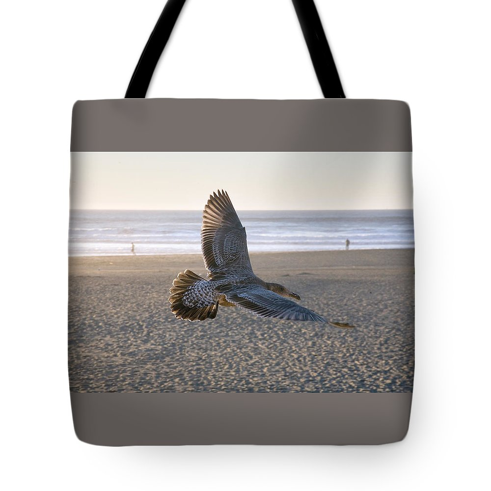 Flying Bird Photograph Tote Bag featuring the photograph Baby Gull At Dusk by Daniel Furon