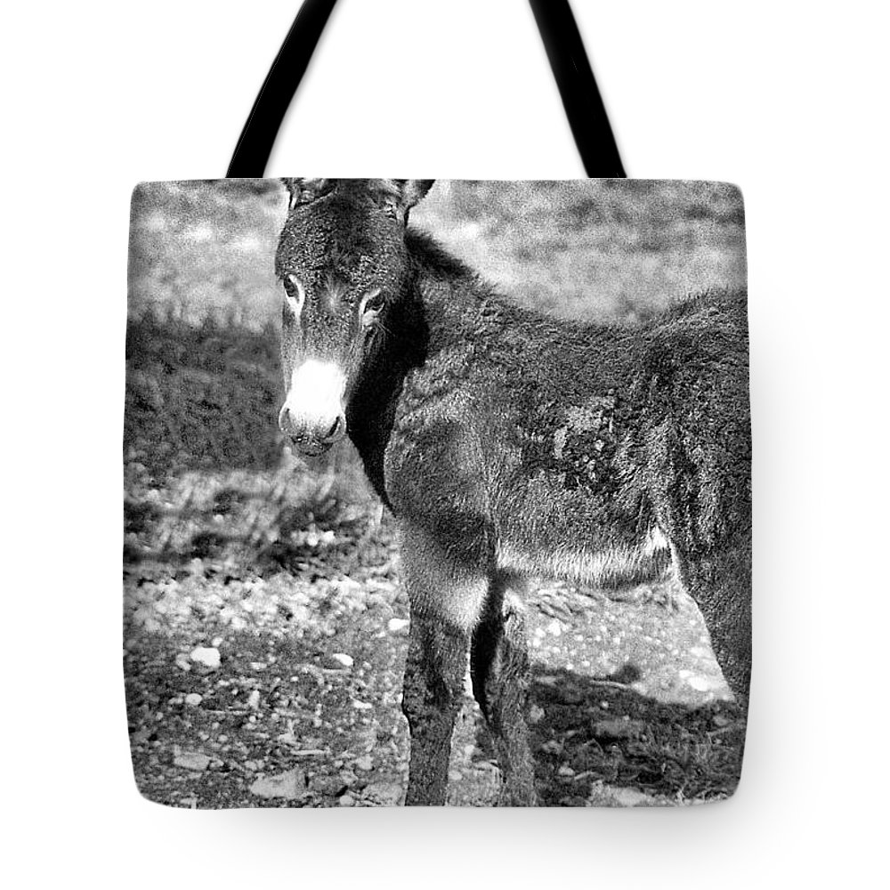 Animals Tote Bag featuring the photograph Baby Jenny 2 by Jan Amiss Photography