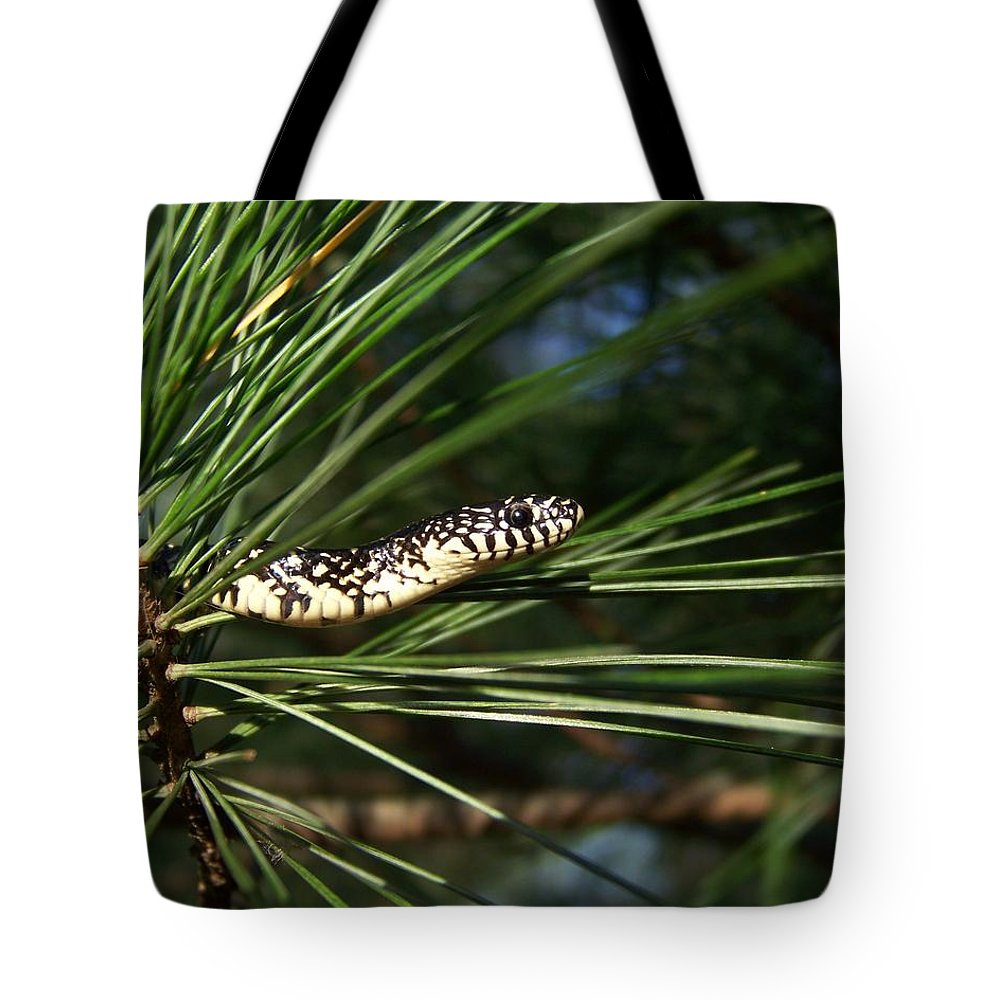 Snake Tote Bag featuring the photograph Baby King Snake by Jai Johnson