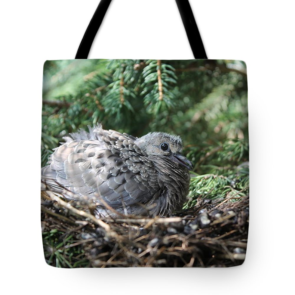 Birds Tote Bag featuring the photograph Baby Morning Dove by Dennis Pintoski