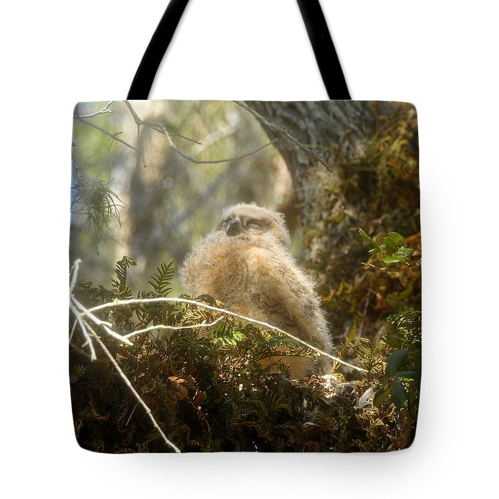 Great Horned Owl Tote Bag featuring the photograph Baby Owl Sleeping by David Lee Thompson