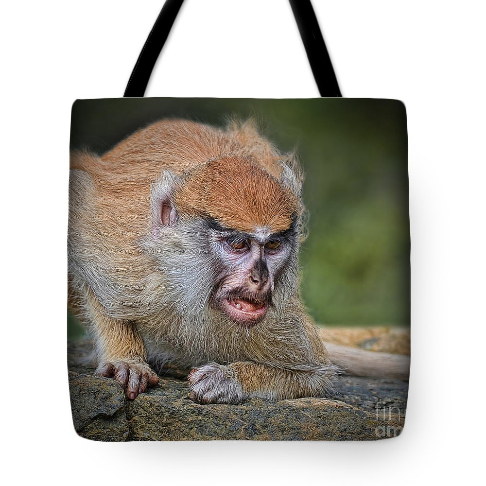 Patas Monkey Tote Bag featuring the photograph Baby Patas Monkey On Guard by Jim Fitzpatrick