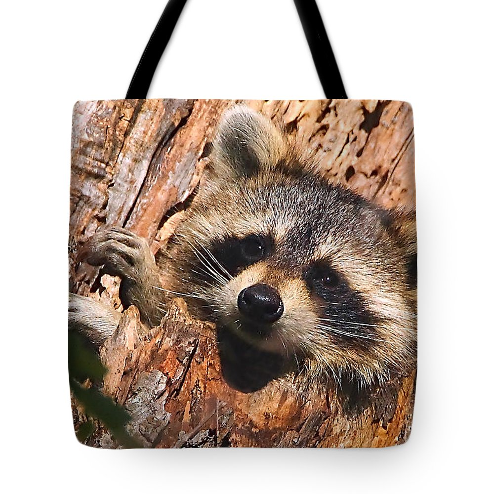 Raccoon Tote Bag featuring the photograph Baby Raccoon by William Jobes