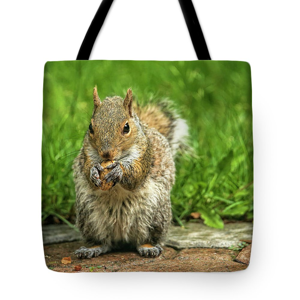 Recent Tote Bag featuring the photograph Baby Squirrel's First Peanut by Geraldine Scull