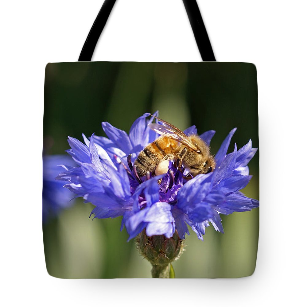 Bee. Flower Tote Bag featuring the photograph Bachelor Button And Bee by Heather Coen