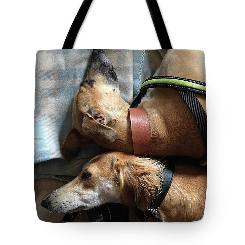 Persiangreyhound Tote Bag featuring the photograph Back 2 Back - Ava And Finly Relaxing At by John Edwards