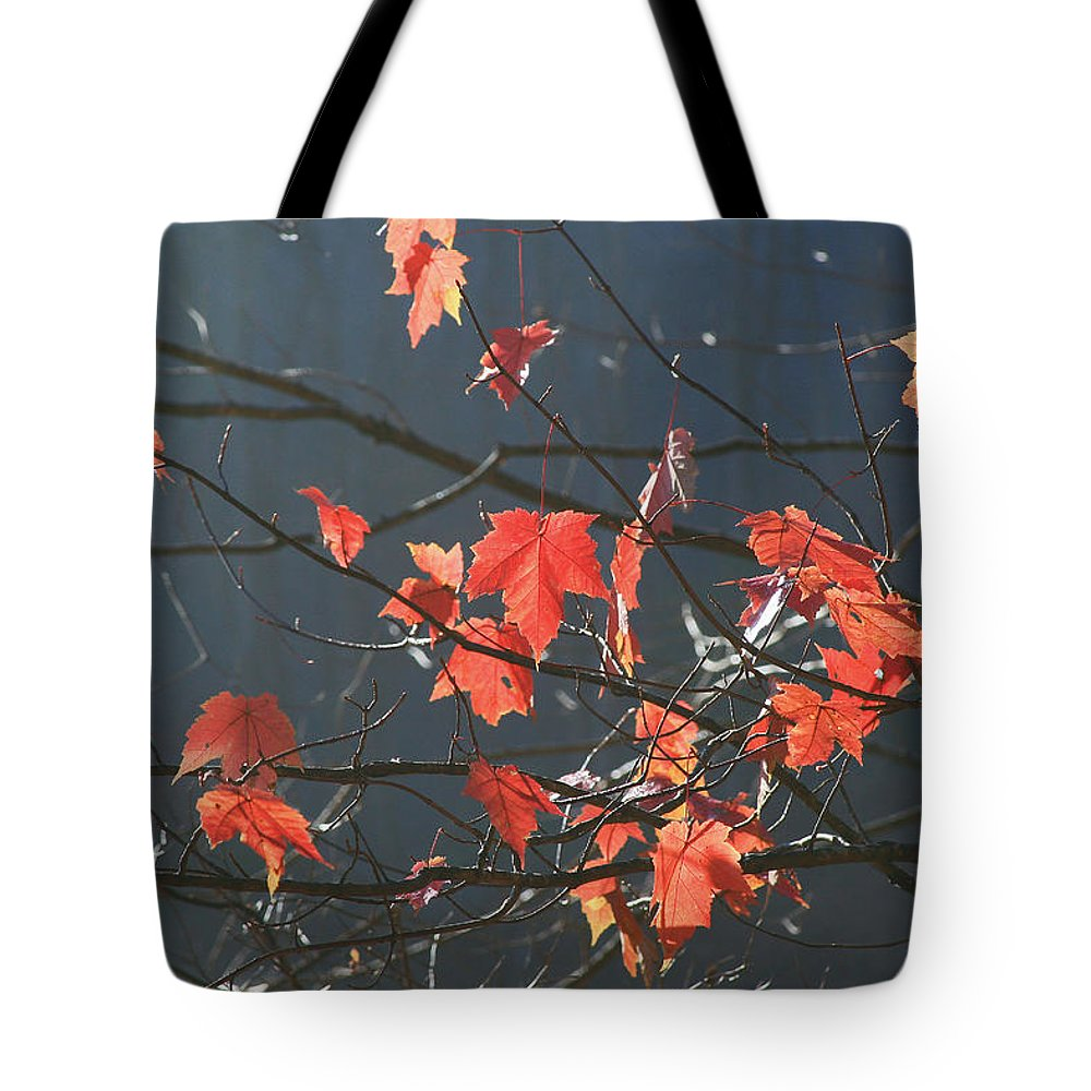 Fall.nature Tote Bag featuring the photograph Back Light Mapel by Itai Minovitz