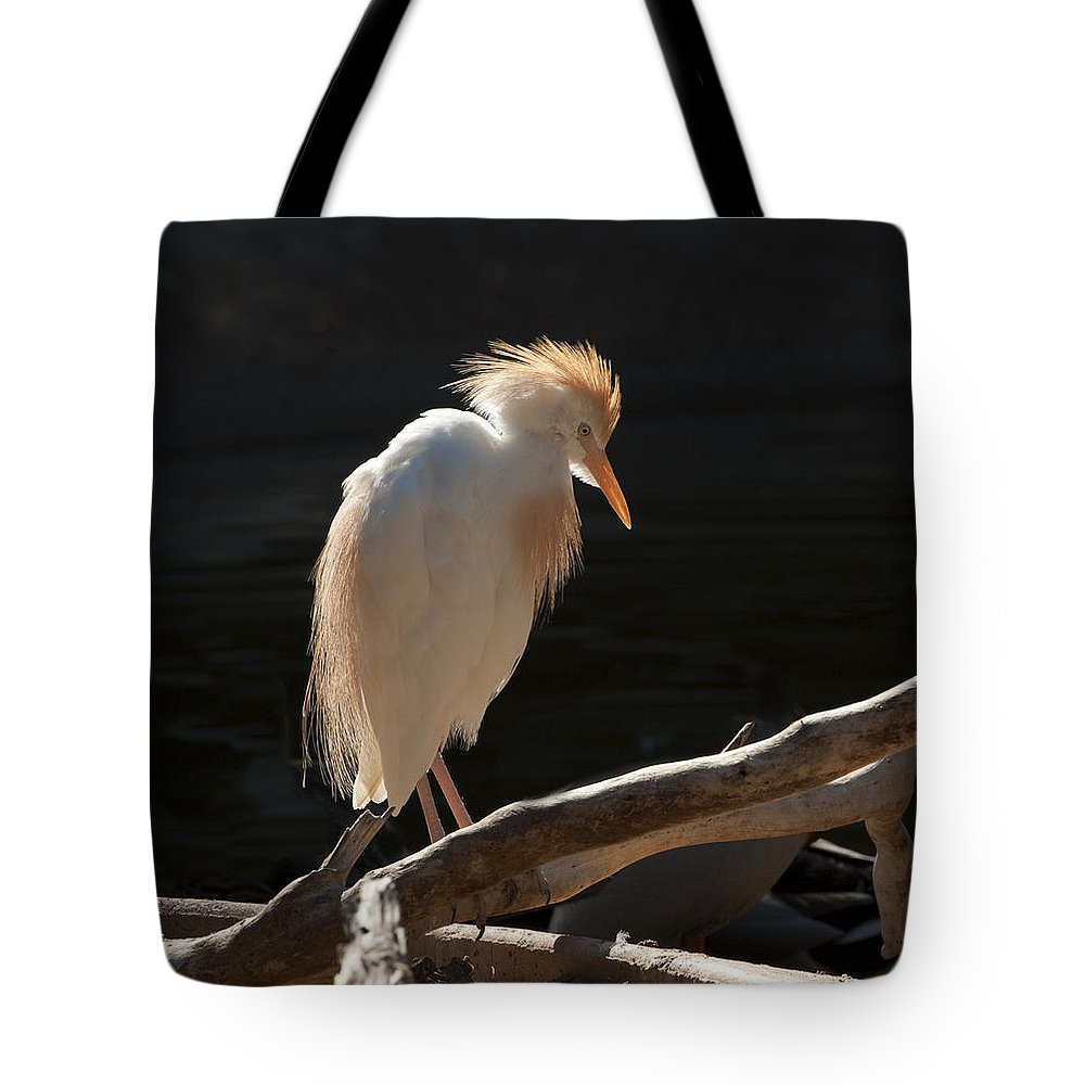 Bird Tote Bag featuring the photograph Backlit Egret by Sandra Bronstein