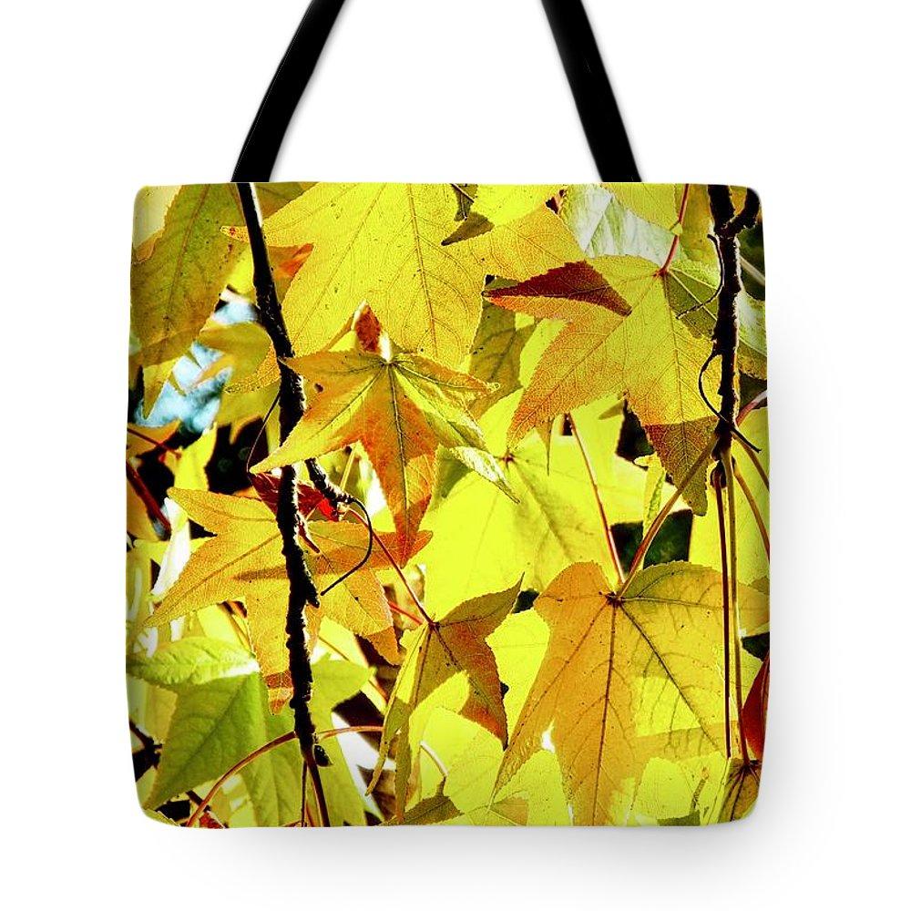 Liquidambar Tote Bag featuring the photograph Backlit Liquidambar Leaves by Kirsten Giving