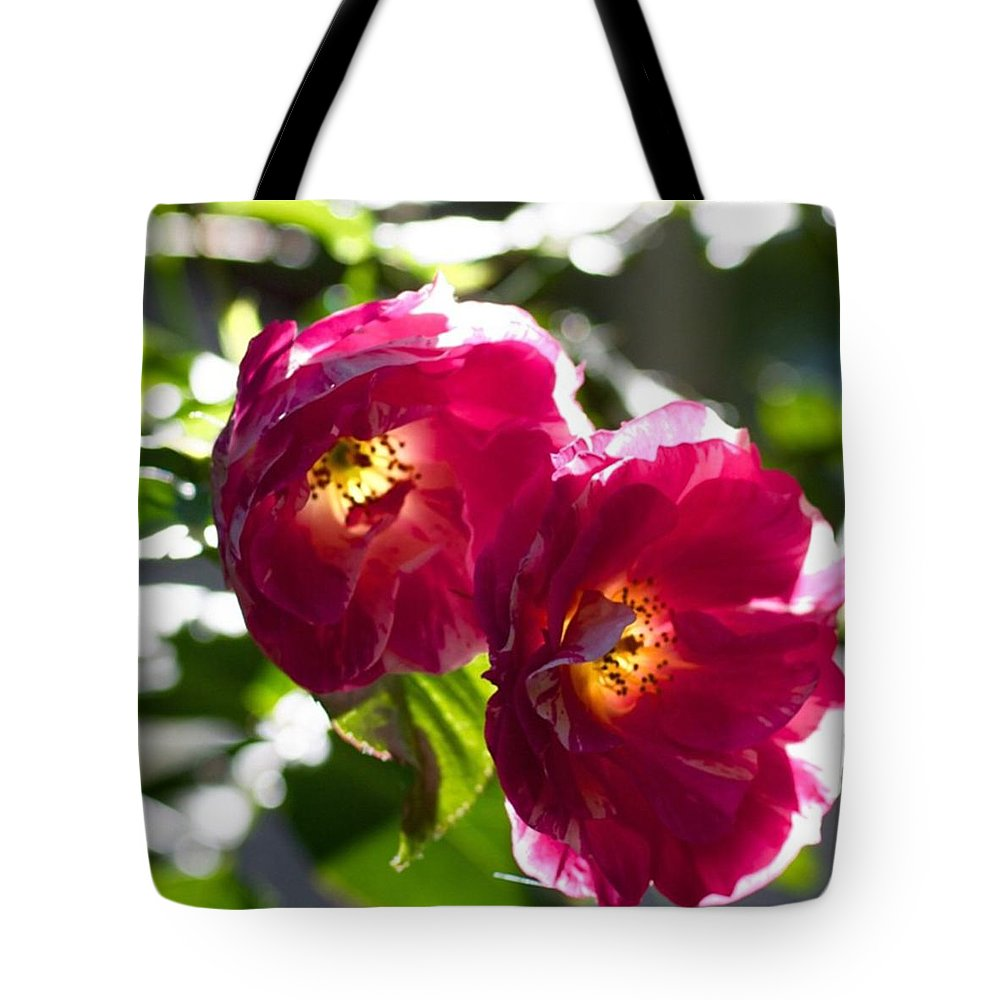 Backlit Roses In My Garden Tote Bag featuring the photograph Backlit Roses In My Garden by Anna Porter
