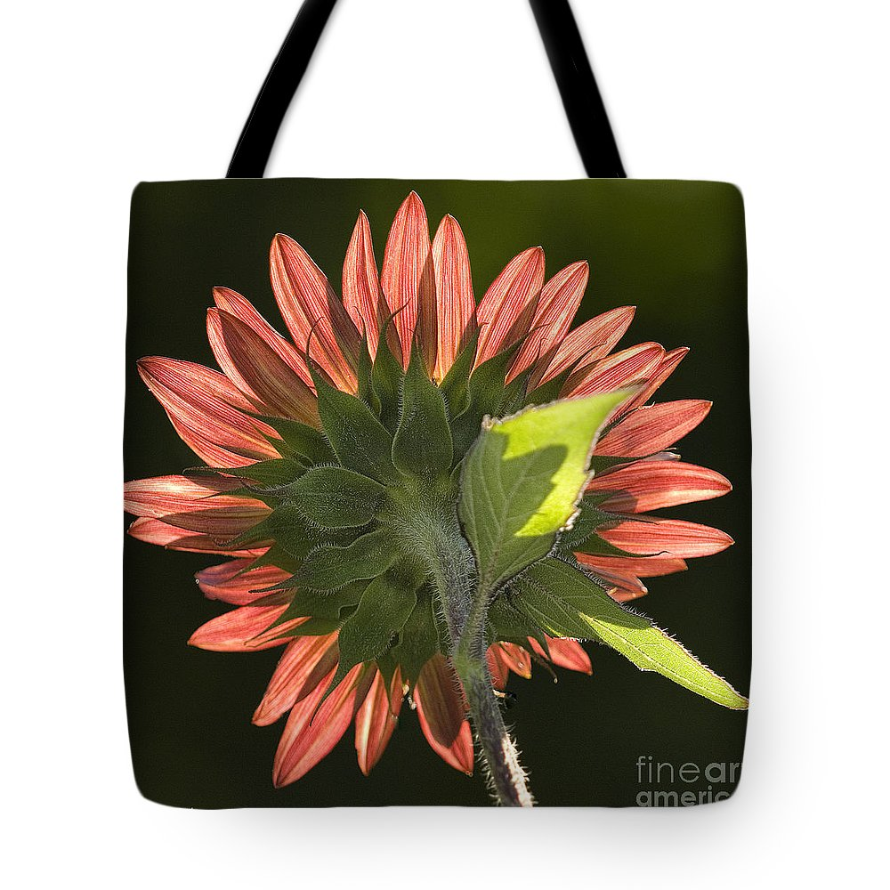 Sunflower Tote Bag featuring the photograph Backlit Sunflower by Sandra Bronstein
