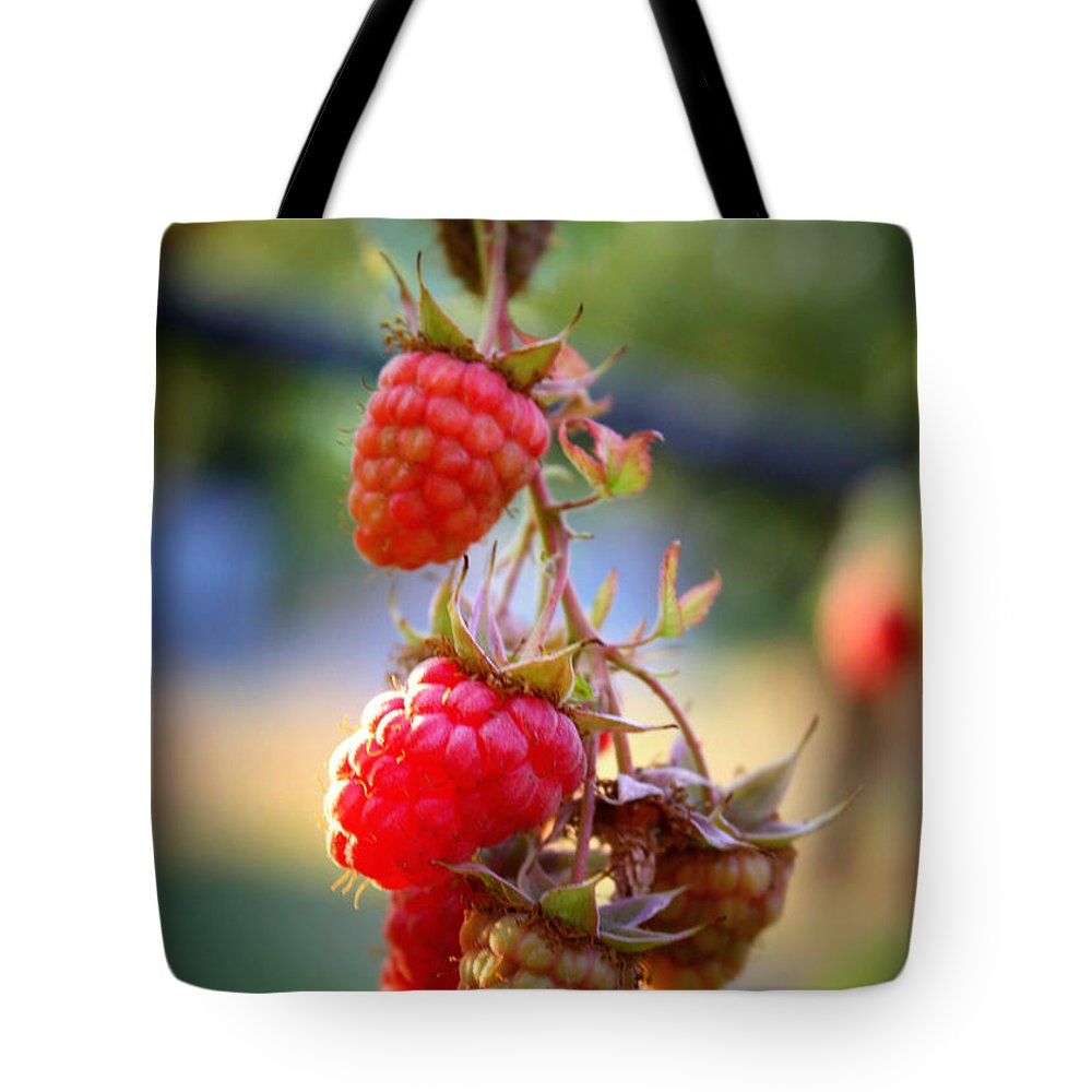 Food And Beverage Tote Bag featuring the photograph Backyard Garden Series - The Freshest Raspberries by Carol Groenen