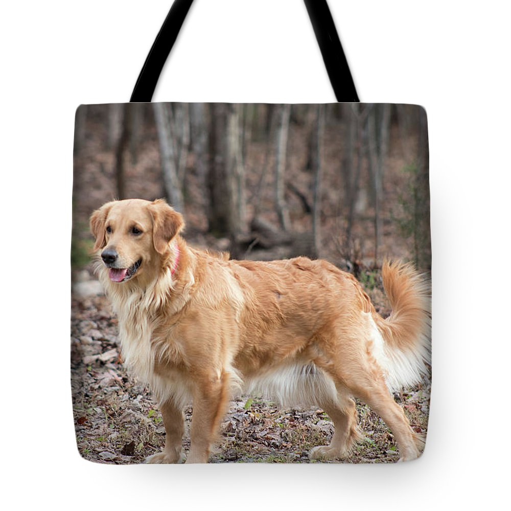 Dog Golden Retriever Pet Tote Bag featuring the photograph Bailee The Golden by Kristie Cyrus