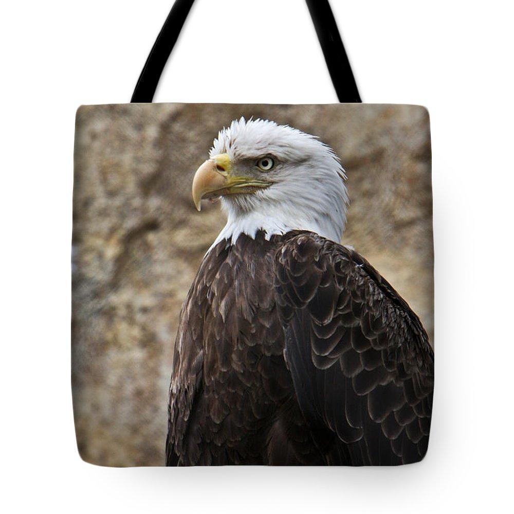 Bald Tote Bag featuring the photograph Bald Eagle - Portrait 2 by Douglas Barnett