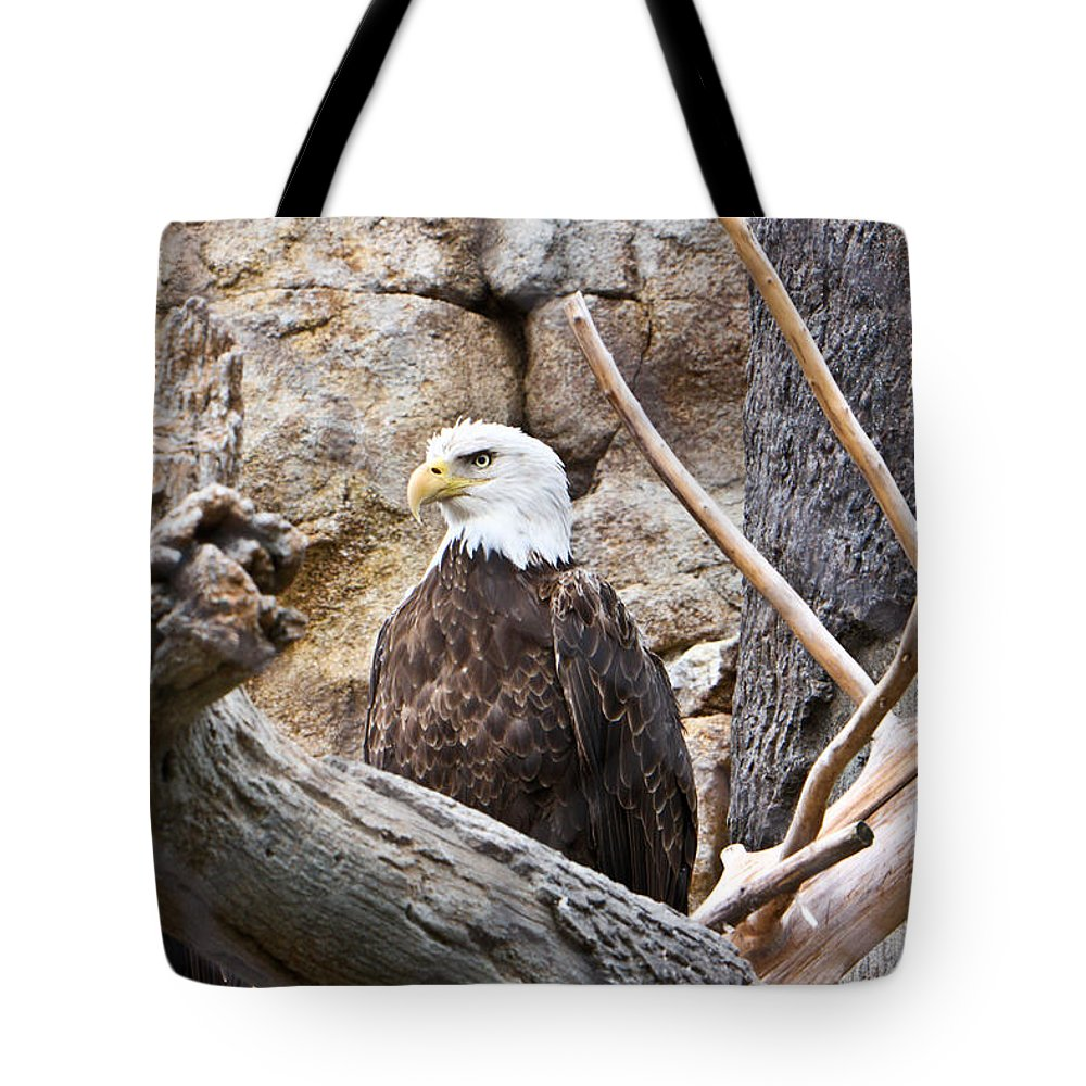 Bald Eagle Tote Bag featuring the photograph Bald Eagle by Douglas Barnett