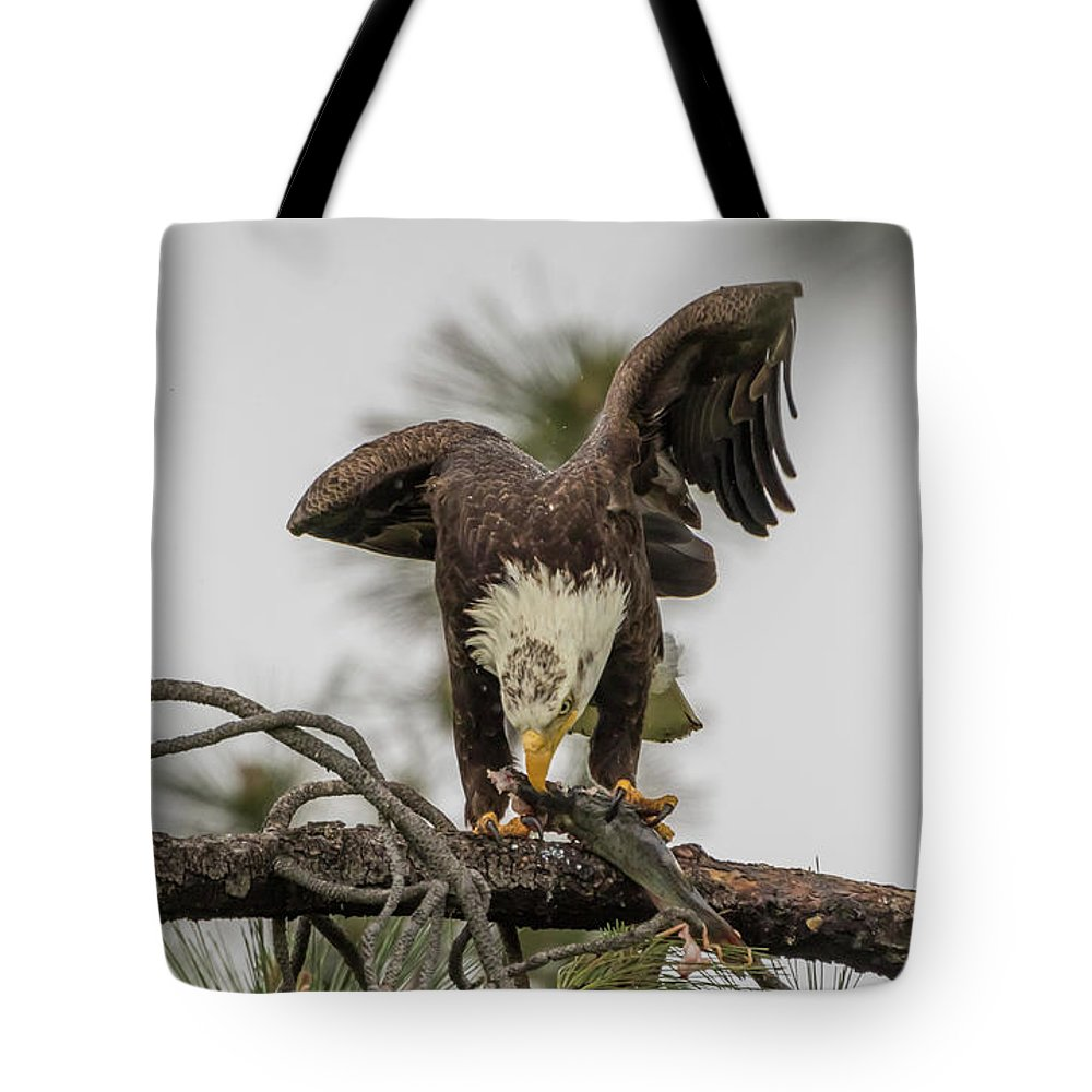 California Tote Bag featuring the photograph Bald Eagle Eating Fish by Marc Crumpler