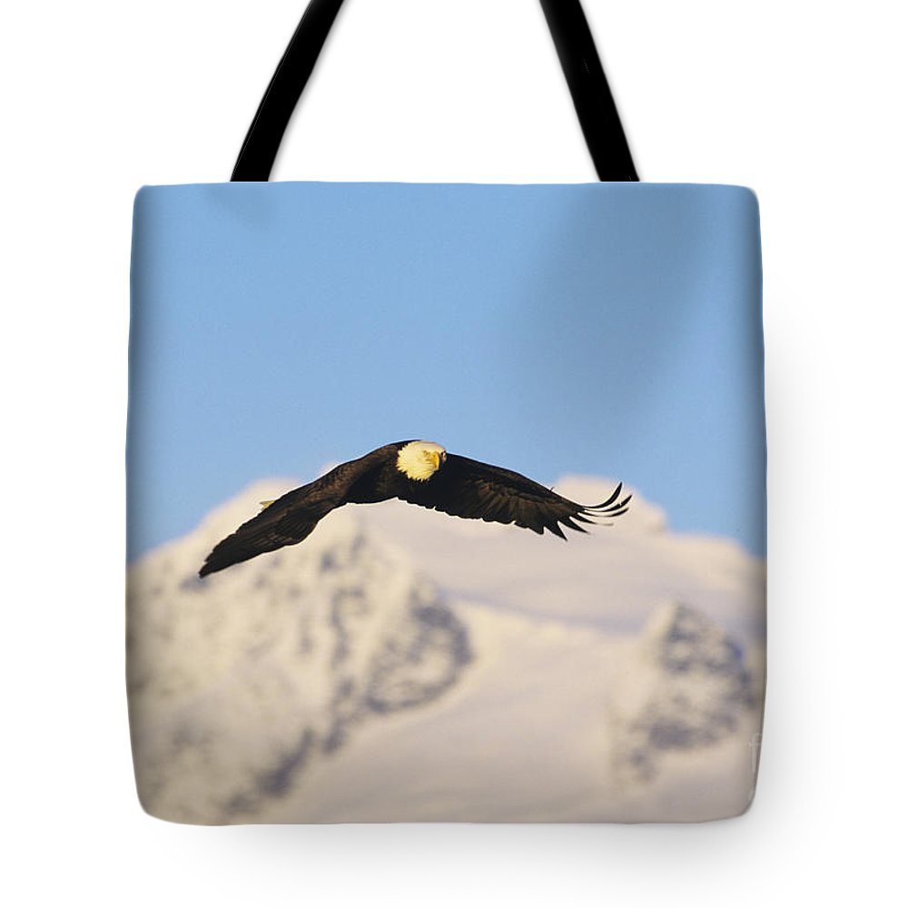 Afternoon Tote Bag featuring the photograph Bald Eagle Flying In Alaska by John Hyde - Printscapes