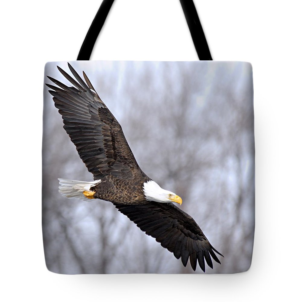 American Bald Eagle Tote Bag featuring the photograph Bald Eagle In Flight by Larry Ricker