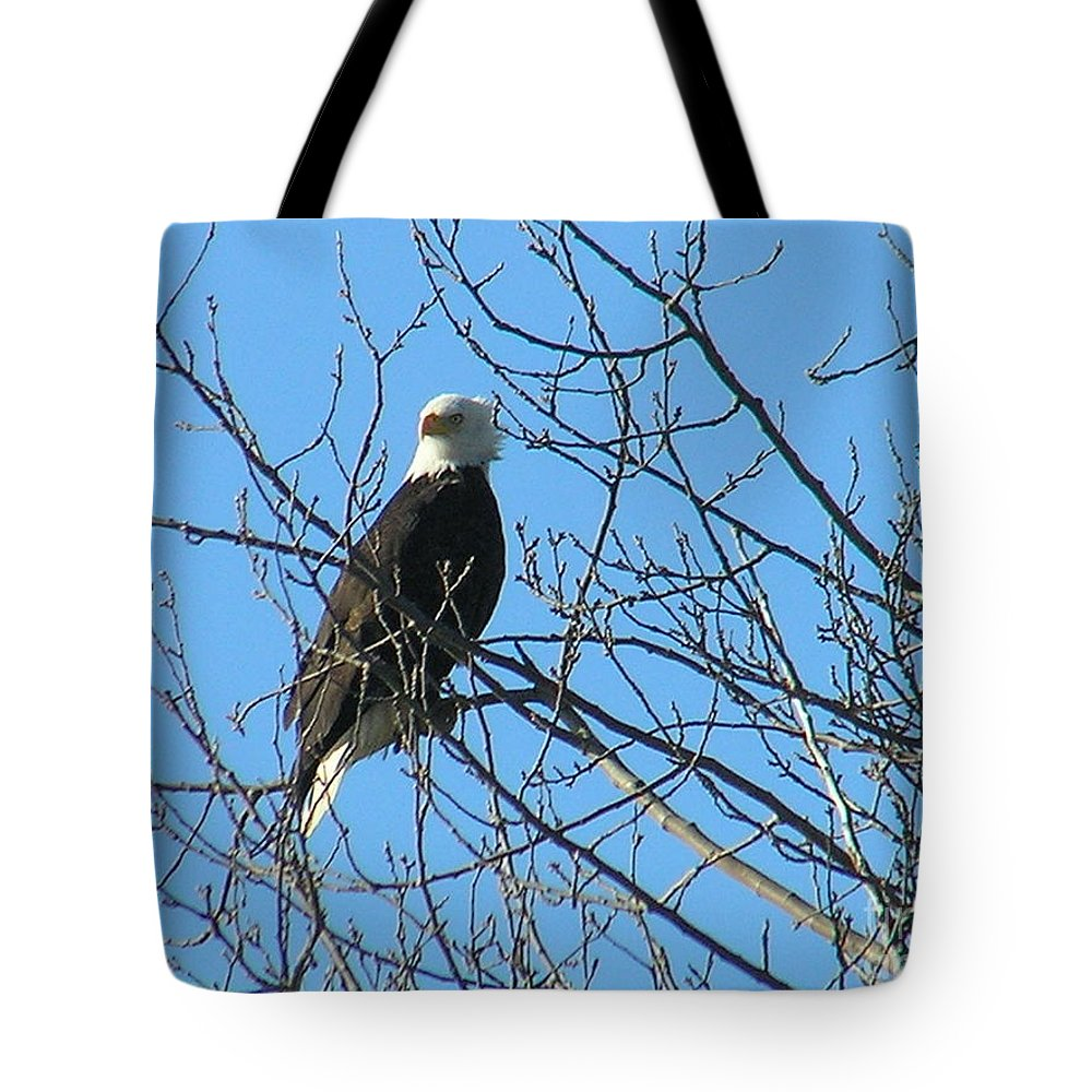 Bald Tote Bag featuring the photograph Bald Eagle by Louise Magno