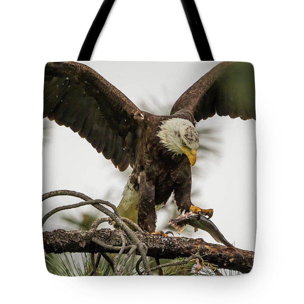California Tote Bag featuring the photograph Bald Eagle Picking Up Fish by Marc Crumpler
