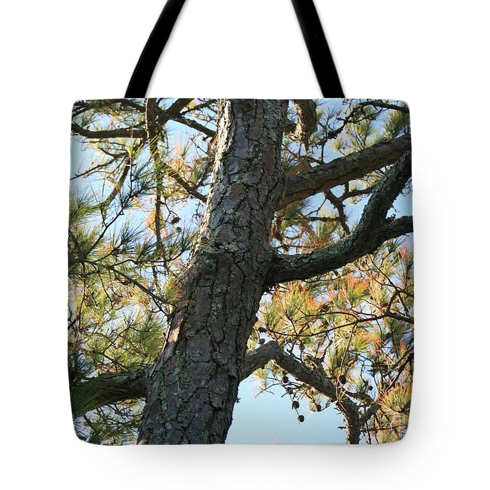 Tree Tote Bag featuring the photograph Bald Head Tree by Nadine Rippelmeyer