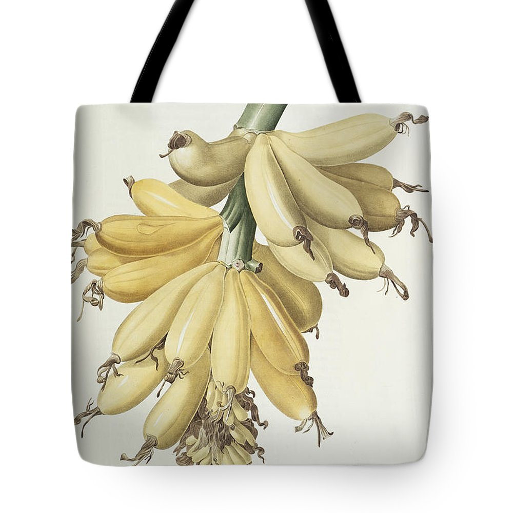 Banana Tote Bag featuring the drawing Bananas by Pierre Joseph Redoute
