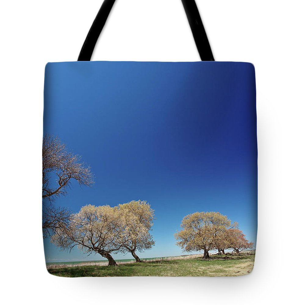 Bare Tote Bag featuring the digital art Bare Trees Along Shore Of Lake Manitoba by Mark Duffy