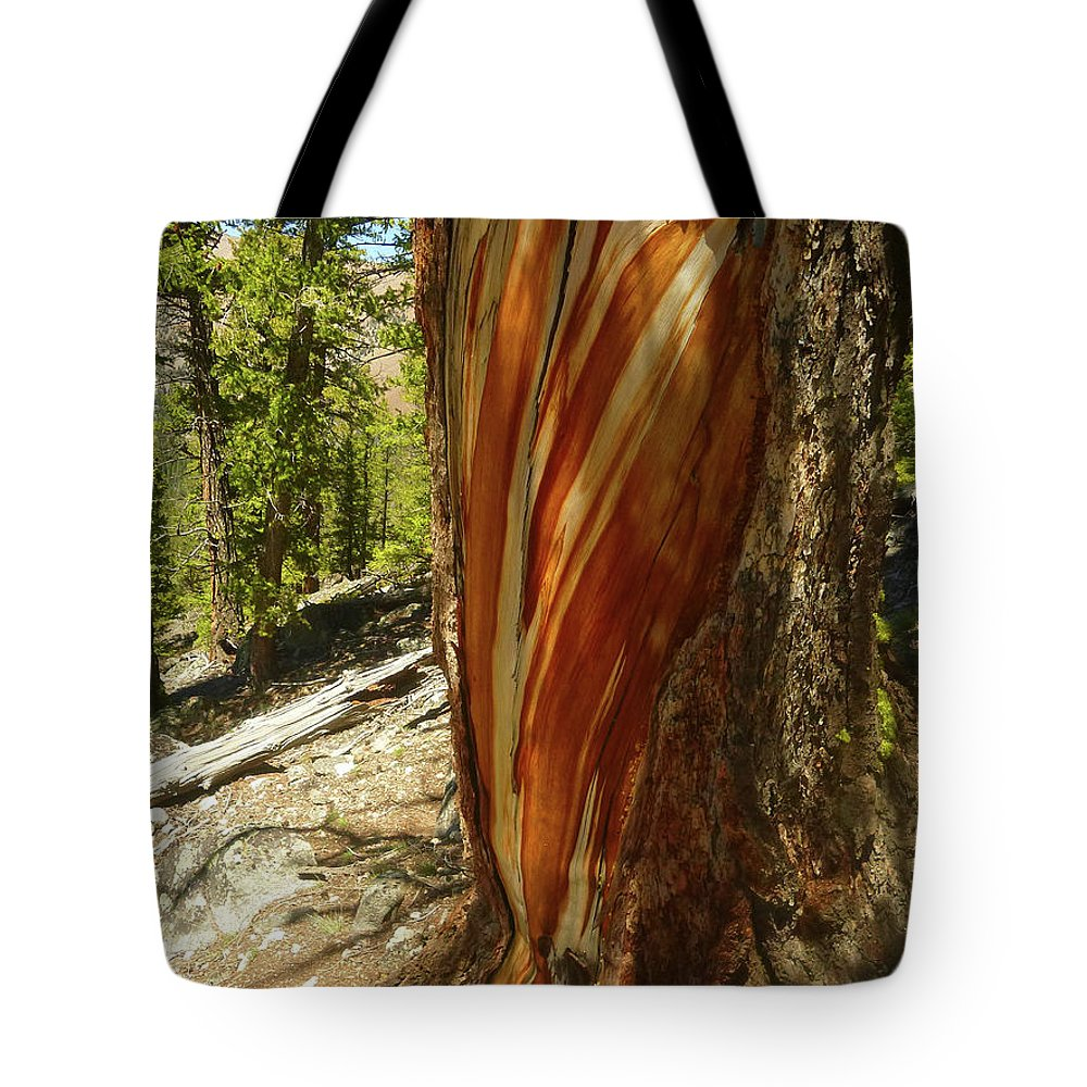 Tree Tote Bag featuring the photograph Bare Wood by Dan Dixon