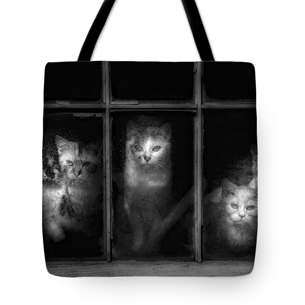 Barn Tote Bag featuring the photograph Barn Cats by Laszlo Gyorsok