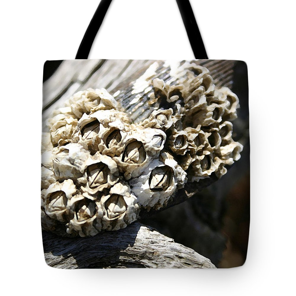 Shells Tote Bag featuring the photograph Barnicles And Wood by Mary Haber