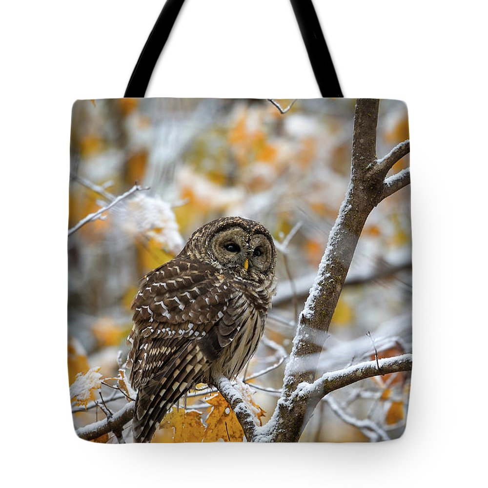 Owl Tote Bag featuring the photograph Barred Owl by Anthony Heflin