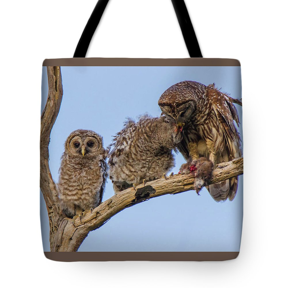 Barred Tote Bag featuring the photograph Barred Owl Family by Maggie Brown