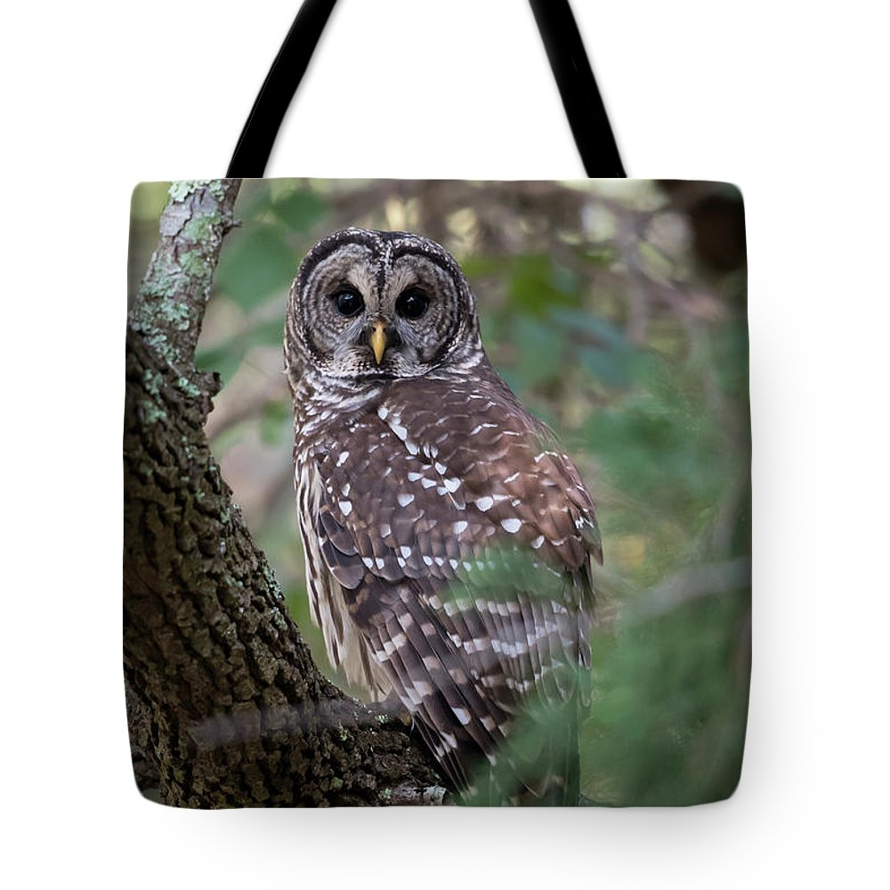 Barred Owl Tote Bag featuring the photograph Barred Owl by George DeCamp