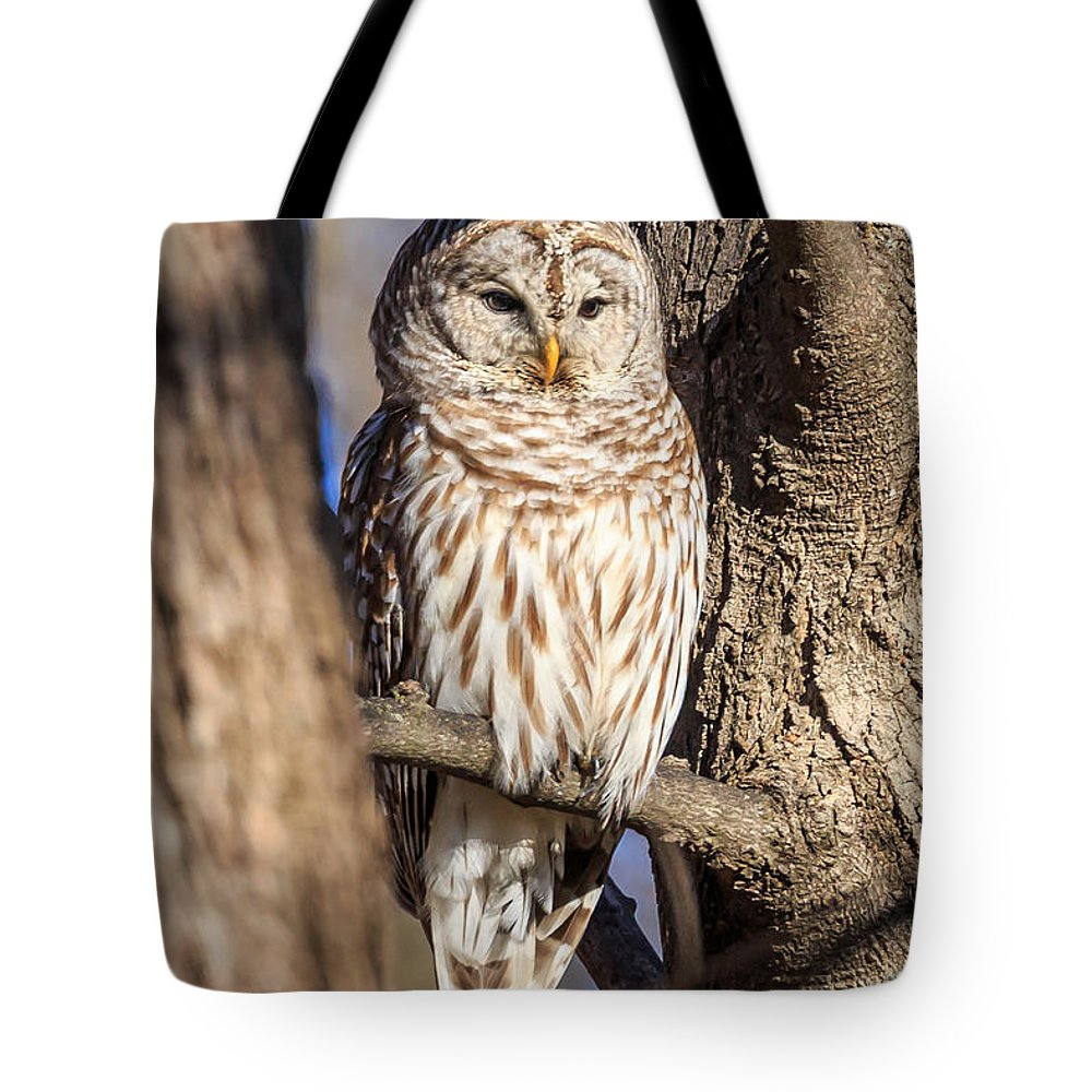 Barred Owls Tote Bag featuring the photograph Barred Owl by Paul Schultz