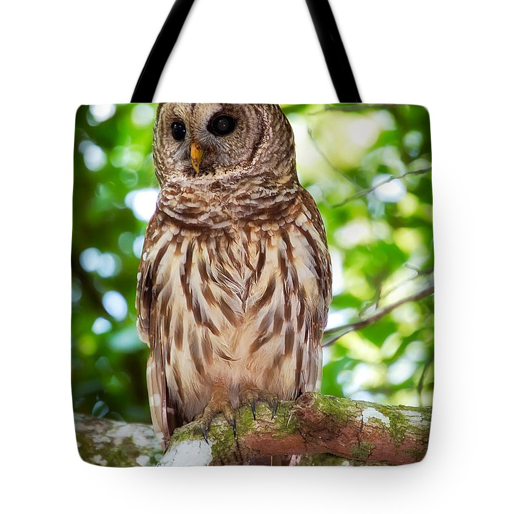 Animal Tote Bag featuring the photograph Barred Owl by Rich Leighton