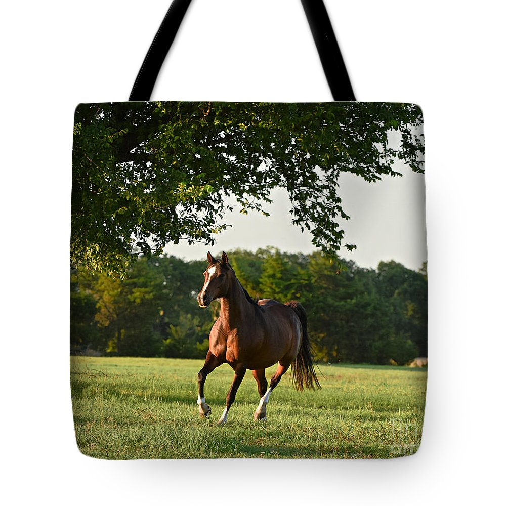 Arabian Tote Bag featuring the photograph Bay Arabian Mare by Jeanette Fiveash
