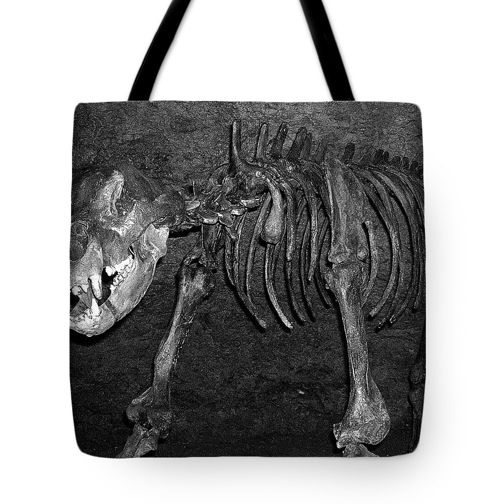 Europe Tote Bag featuring the photograph Be Nice ... by Juergen Weiss