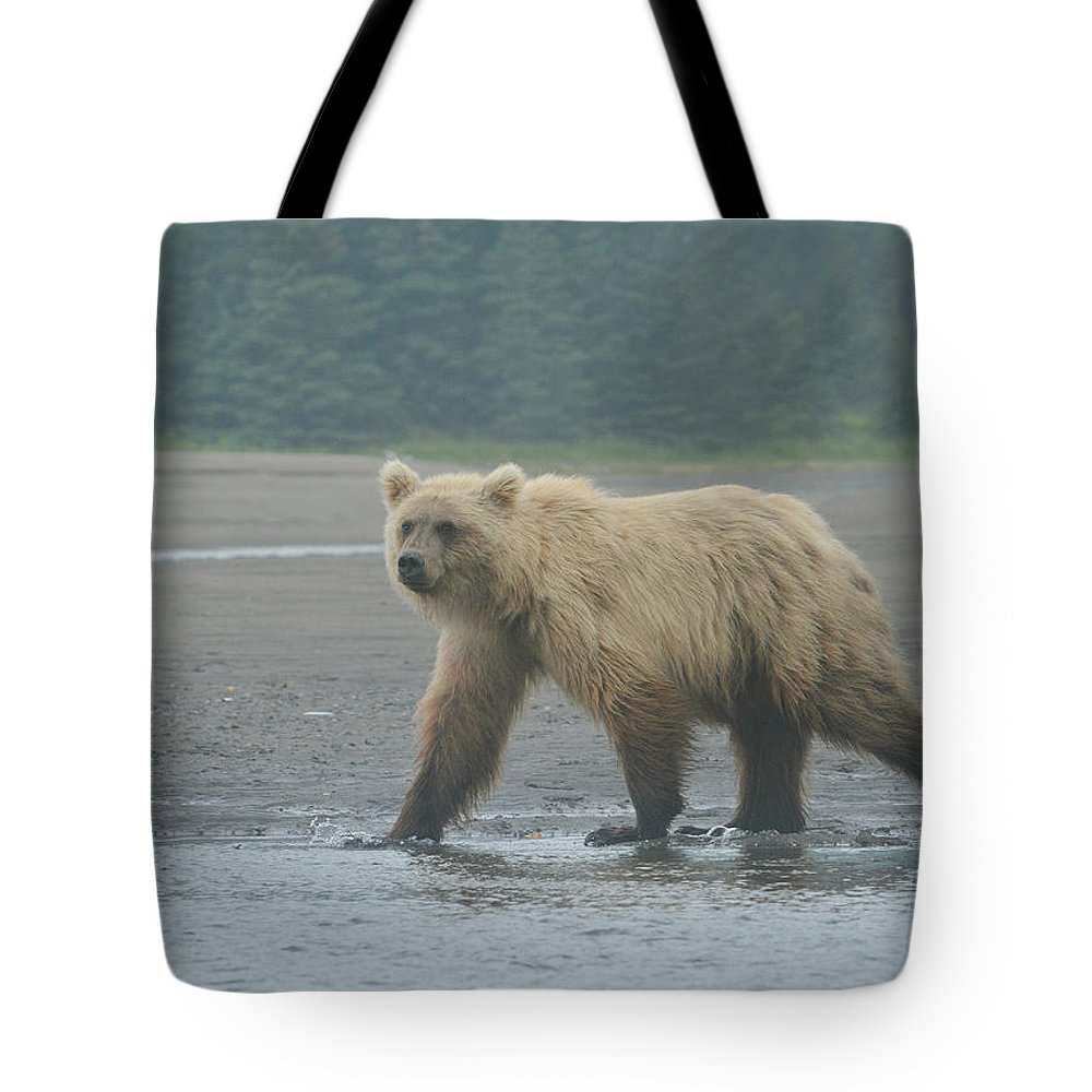 Grizzly Bear Tote Bag featuring the photograph Beach Patrol 3 by Fraida Gutovich