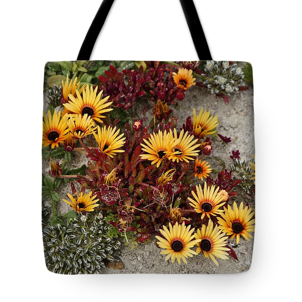 Africa Tote Bag featuring the photograph Beach Potpourri by Michele Burgess