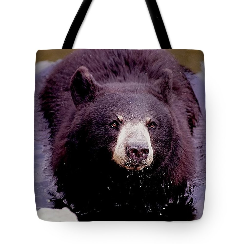 Animals Tote Bag featuring the photograph Bear Necessities by Jan Amiss Photography