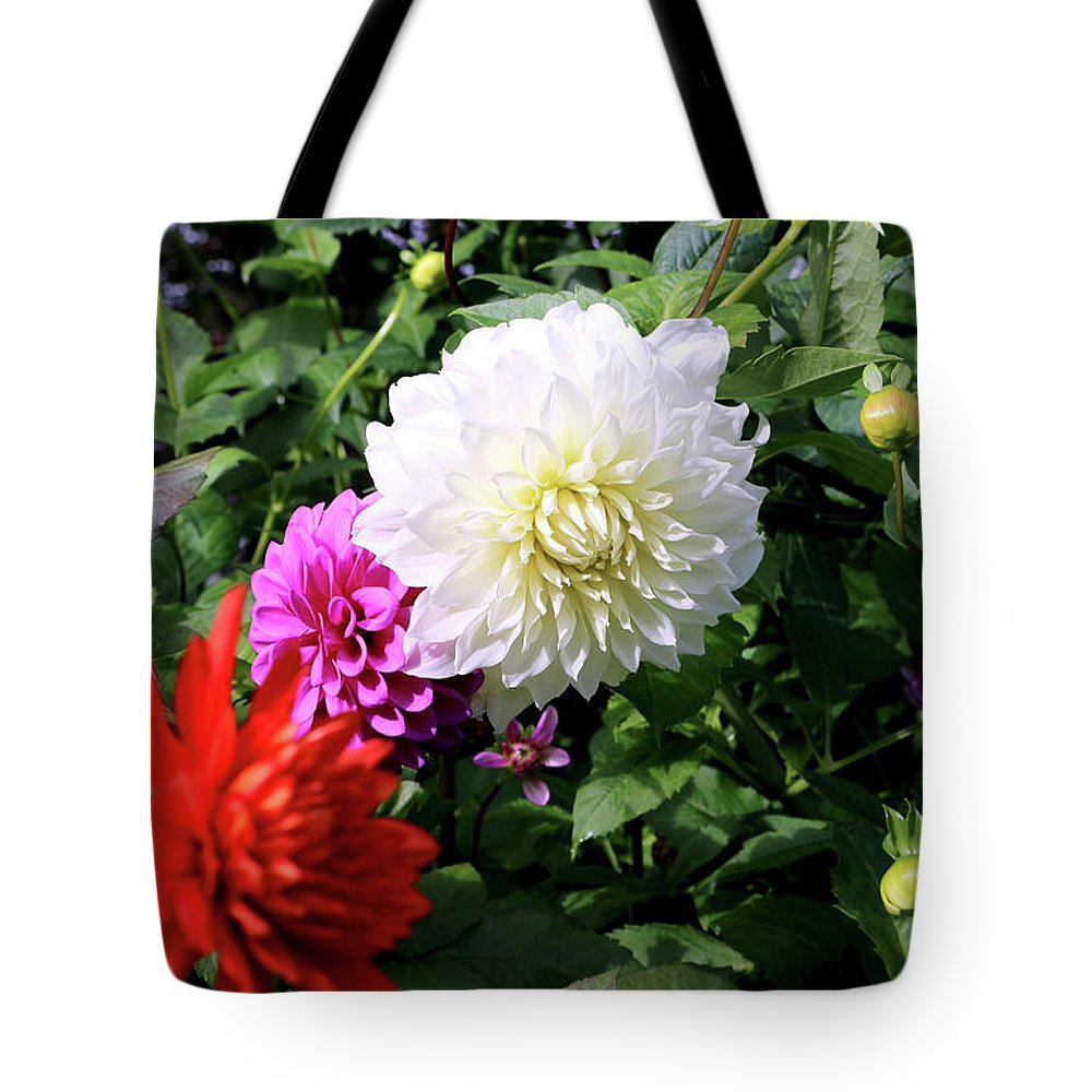 Outdoor Tote Bag featuring the photograph Beautiful And Fresh Dahlias In The Butchrt Gardens,vancouver Island 1. by Andrew Kim